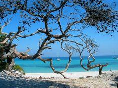 Corse Saint Florent