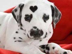 A Little Heart for a Little Pup