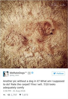 10+ Times People Failed To Send Dog Pics To 'We Rate Dogs' Twitter