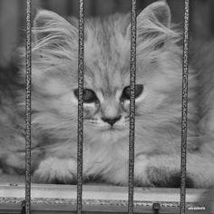 A journalist cat in Turkey