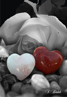 Splash of Colour Blue Wallpaper Iphone, Blue Wallpapers, Iphone Wallpaper, Gothic Fantasy Art, Splash Photography, Hearts And Roses, Black And White Pictures, Heart Art, Beautiful Gifts