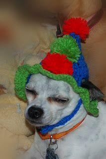 Posh Pooch Designs Dog Clothes: Happy Birthday To Maximo