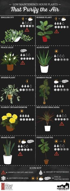 Terrace Garden - INFOGRAPHIC: Low Maintenance House Plants That Purify the Air This time, we will know how to decorate your balcony and your garden easily with plants #houseplantsairpurifying #gardeningknowhow
