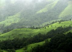 Shola Grasslands and forests in the Kudremukh National Park, Western Ghats, Karnataka, India