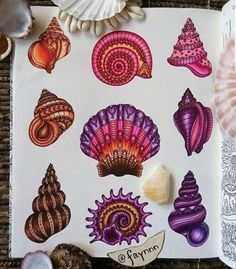 Love the style of these seashells! But if I were to get any of them as tattoos, I wouldn't want color. Shell Drawing, Ocean Drawing, Surfboard Drawing, Seashell Tattoos, Pitt Artist Pens, Coloring Tips, Adult Coloring, Tattoo Feminina, Polychromos