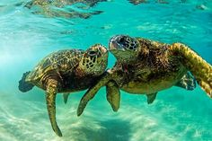Sea Turtles Clark Little