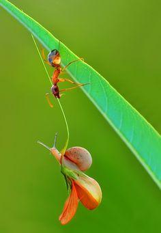 Photograph Rescue !!! by Mustafa Öztürk on 500px #Ant #Snail