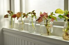 Propagating and over-wintering Coleus,start now in Fall before the first bad frost hits….