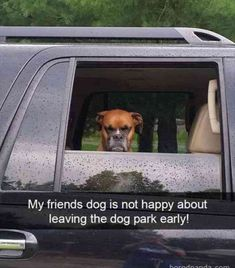These Hilarious Memes Show Why Dogs Never Want To Leave The Park #dogmemes