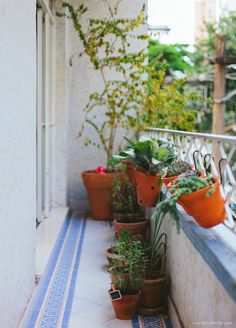 Varanda estreitinha com piso azul e branco e vários de vasinhos de plantas.