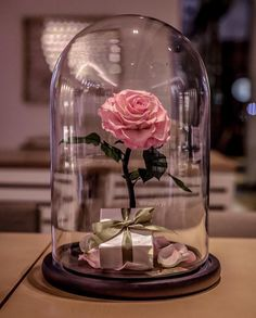 Beauty and The Beast Enchanted Rose Glass Dome LED Romantic Christmas Gift Decor for sale online Enchanted Rose, Tout Rose, Forever Rose, Jolie Photo, Romantic Gifts, Real Beauty, Pink Aesthetic, Cute Wallpapers, Aesthetic Wallpapers
