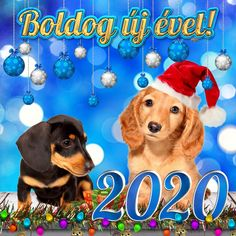 Boldog új évet 2020! - Megaport Media Share Pictures, Animated Gifs, Happy New Year 2020, Evo, Scooby Doo, Seasons, Fictional Characters, Image, Watch