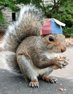 Une étudiante apprivoise les écureuils de son campus… (image)