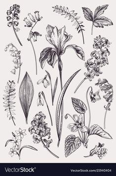 Set with spring flowers Vintage botanical illustration Vector floral elements Black and white Stock Vector - 109758290 Botanical Tattoo, Botanical Drawings, Botanical Flowers, Botanical Prints, Vector Flowers, Floral Flowers, Botanical Gardens, Botanisches Tattoo, Symbol Tattoos
