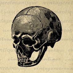 Digital Graphic Skull Image Illustration Download Antique