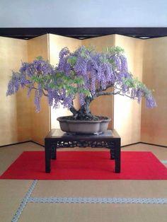 Bonsai ▓█▓▒░▒▓█▓▒░▒▓█▓▒░▒▓█▓ Gᴀʙʏ﹣Fᴇ́ᴇʀɪᴇ ﹕ Bɪᴊᴏᴜx ᴀ̀ ᴛʜᴇ̀ᴍᴇs ☞  http://www.alittlemarket.com/boutique/gaby_feerie-132444.html ▓█▓▒░▒▓█▓▒░▒▓█▓▒░▒▓█▓