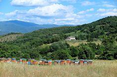 the Campestri bee yard