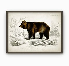 Bear Vintage Illustration Wall Art Poster  Brown by QuantumPrints