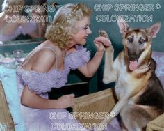 GINGER ROGERS AND A GERMAN SHEPARD BEAUTIFUL COLOR PHOTO BY CHIP SPRINGER. Featured Ebay Listing. Please visit my Ebay Store, Legends of the Silver Screen, at http://legendsofthesilverscreen.com to see the current listings of your favorite Stars now in glorious color! Thanks for looking and check out my Youtube videos at https://www.youtube.com/channel/UCyX926rA5x4seARq5WC8_0w