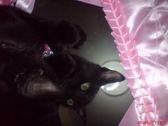 my cat eimy