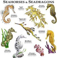 The Lifespan of a Bearded Dragon Depends on Proper Care - Exotic Bearded Dragons Beautiful Sea Creatures, Animals Beautiful, Cute Animals, Animals Sea, Weedy Sea Dragon, Paludarium, Marine Biology, Ocean Creatures, Animals Of The World