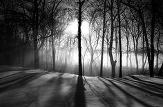 Through the Trees by Mark Heine Photos, via Flickr