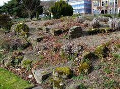 Risultati immagini per come realizzare un piccolo giardino roccioso