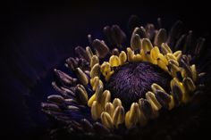Intimate with a flower - Anemone up close