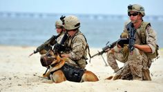 Special Forces Working Dogs | ... hill air force base in utah allen stokes u s air force handout reuters
