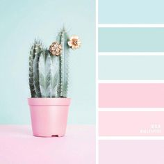 100 Color Inspiration Schemes : Mint and Pink Color The Perfect Pink Color Combinations { Blush + light blue + Mint}, blush and mint color palette, blue and blush colour paletteBlush + light blue + Mint A pretty color palette of blush pink Blush Color Palette, Color Schemes Colour Palettes, Color Combos, Pastel Palette, Vintage Colour Palette, Bright Color Schemes, Blue Palette, Color Trends, Pink Color Combination