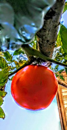 ©2016 fruits garden  artfromperry