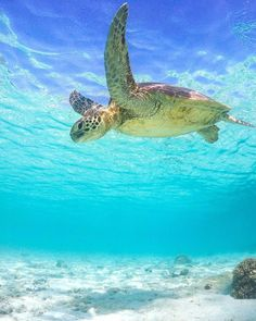 sea life - sea life photography - sea life underwater - sea life artwork - sea life watercolor sea l Underwater Photography, Animal Photography, Sea Turtle Pictures, Save The Sea Turtles, Underwater Sea, Under The Ocean, Tortoise Turtle, Turtle Love, Most Beautiful Animals