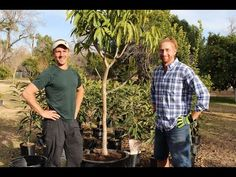 Shamus O'Leary's Spring 2016 Fruit Trees - YouTube