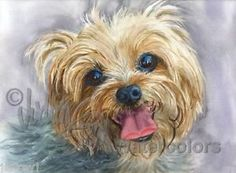 Pets Home : Yorkshire Terrier Yorkie AKC Toy Pet Portrait Dog Art Watercolor Painting Print Picture Wall Art Home Decor Clancy Judith Stein Art Aquarelle, Art Watercolor, Yorkies, Yorkie Dogs, Chien Yorkshire Terrier, Illustration Art Dessin, Top Dog Breeds, Rottweiler Puppies, Poodle Puppies