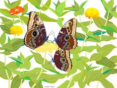 Common Morpho (word / l8r), by  Amy Jean Porter