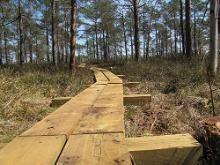 Kodru Fen Hiking Track
