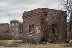 """Picture-A-Day (PAD n.2006) """"Windows & Vines"""" ~Amy, DangRabbit Photography"""