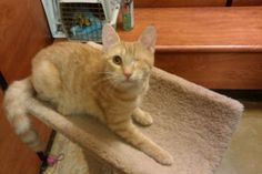 RUBY is an adoptable Tabby - Orange Cat in Cranford, NJ. � Ruby is a very sweet affectionate kitten. She is about 4 months old she was surrendered to us with a very bad URI. -- Poor baby!!