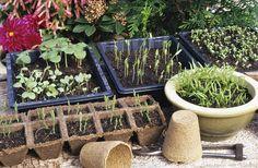 Tous les conseils pour réussir ses semis à coup sûr : laissez les plantes s'endurcir pendant au moins une quinzaine de jours avant de les replanter.