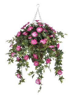 Morning Glory Hanging Plant in Reed Basket Flower Color: Pink >>> Check out the image by visiting the link.