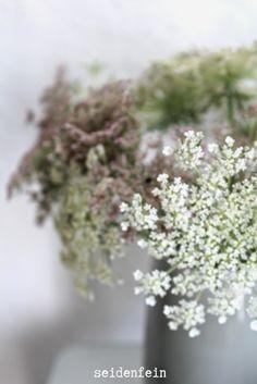 seidenfein 's Dekoblog: wilde Möhre Dekoblog, Queen Annes Lace, Flora, Shabby, Gardening, Plants, Photos, Country Living, Sequins