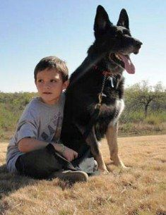 Adopt a retired Military Working Dog    thank you for all that serve and have served our country....people and k-9's