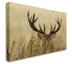 Deer Hiding In The Fields Antlers Wall Picture