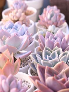 Succulents are flowers too, right? Love the colors on these, so different and fun!