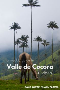 Muddy shoes and magic! A guide to exploring Valle de Cocora in Colombia + a pretty rad travel video.