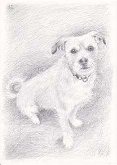 Gerry the dog. Pencil drawing by Antje Bednarek-Gilland.