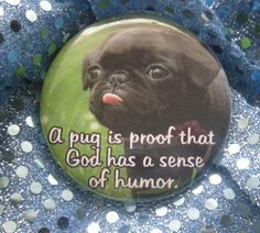 Black Pugs! Love them!