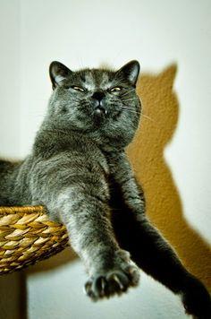 funny-cat-0025.jpg (371×560)