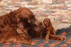 Moeder met puppy