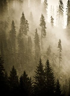 Foggy Trees on a Mountain is one of my favorite things.